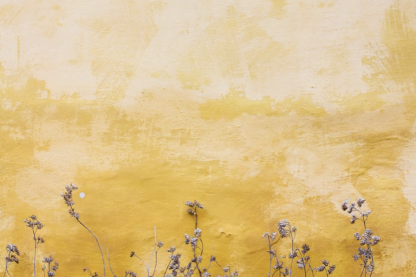 Flowers against yellow wall